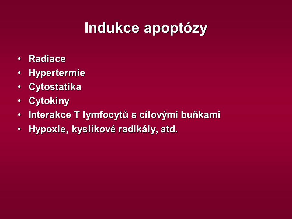 Indukce apoptózy RadiaceRadiace HypertermieHypertermie CytostatikaCytostatika CytokinyCytokiny Interakce T lymfocytů s cílovými buňkamiInterakce T lym
