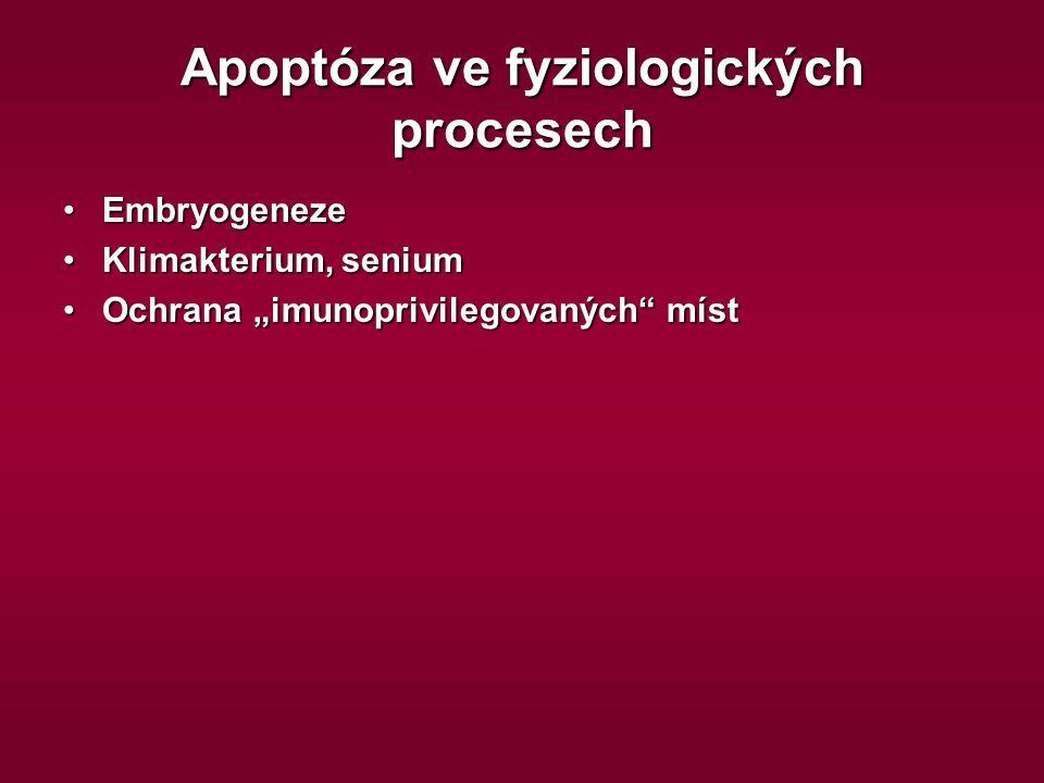 """Apoptóza ve fyziologických procesech EmbryogenezeEmbryogeneze Klimakterium, seniumKlimakterium, senium Ochrana """"imunoprivilegovaných"""" místOchrana """"imu"""