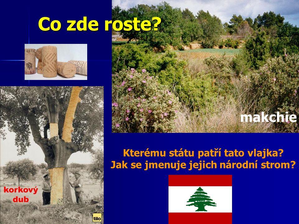 Co zde roste? makchie Kterému státu patří tato vlajka? Jak se jmenuje jejich národní strom?