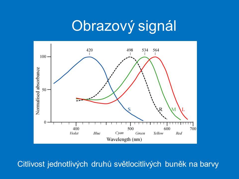 Obrazový signál Citlivost jednotlivých druhů světlocitlivých buněk na barvy
