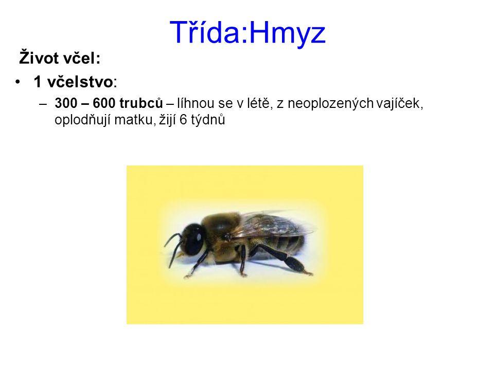 Třída:Hmyz Život včel: 1 včelstvo: –300 – 600 trubců – líhnou se v létě, z neoplozených vajíček, oplodňují matku, žijí 6 týdnů