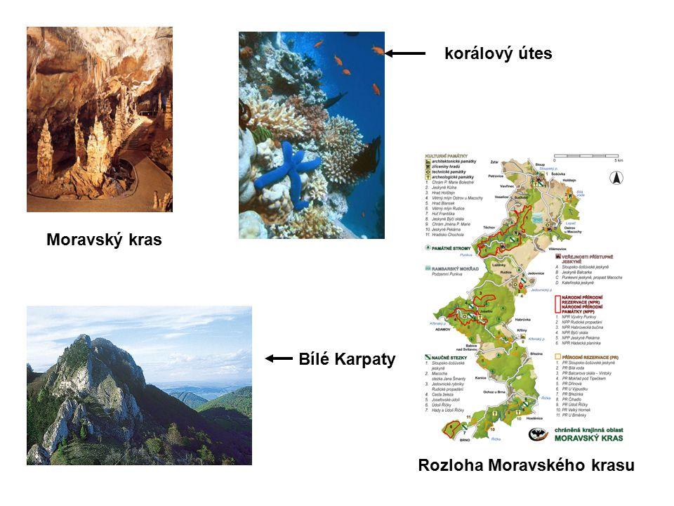 Moravský kras korálový útes Bílé Karpaty Rozloha Moravského krasu