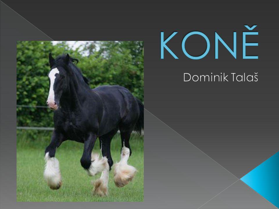  znalost ovládání koní, ošetřování koní, znalost technologických postupů a řešení pracovních situací, schopnost využít teoretických znalostí v praxi  kladný vztah ke zvířatům, svědomitost, smysl pro pořádek aj.
