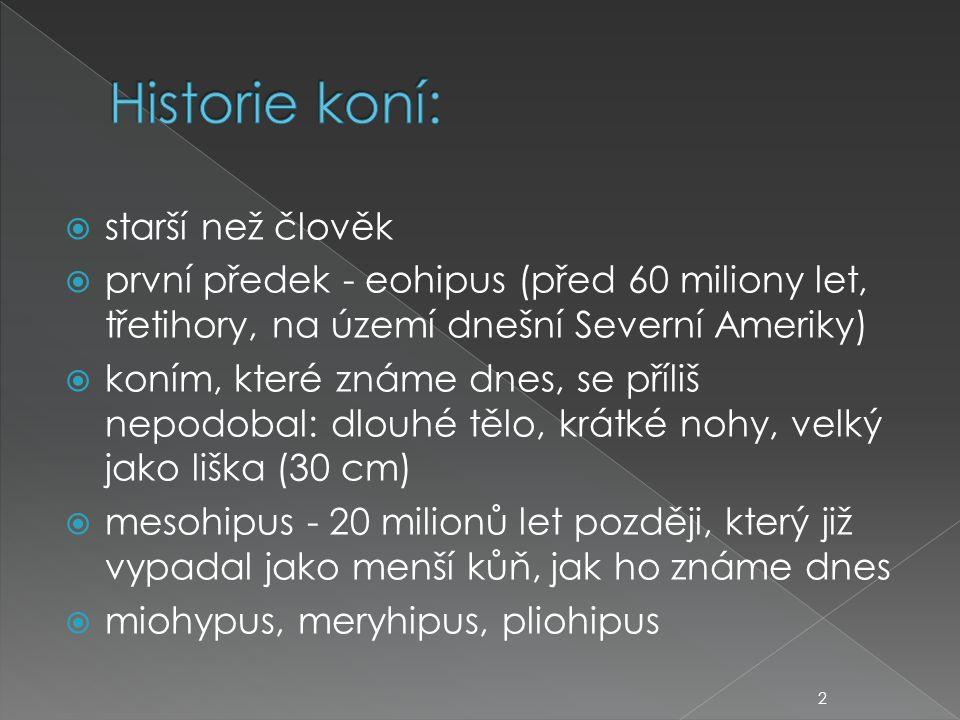  starší než člověk  první předek - eohipus (před 60 miliony let, třetihory, na území dnešní Severní Ameriky)  koním, které známe dnes, se příliš nepodobal: dlouhé tělo, krátké nohy, velký jako liška (30 cm)  mesohipus - 20 milionů let později, který již vypadal jako menší kůň, jak ho známe dnes  miohypus, meryhipus, pliohipus 2