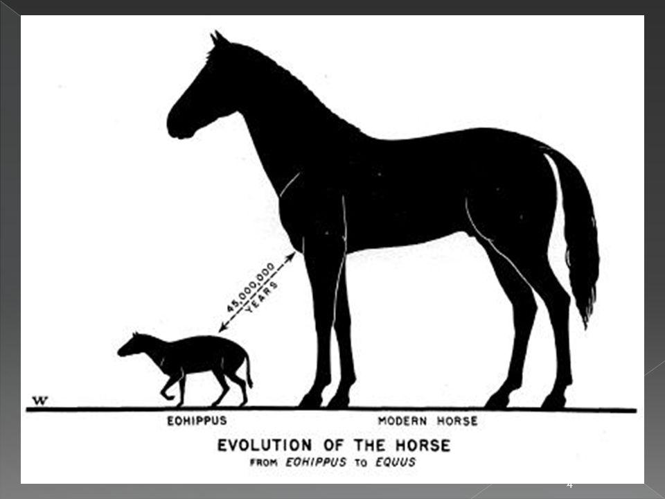  temperamentní štíhlí koně s lehkou hlavou a dlouhýma nohama, používaní především k jízdě v sedle  3 plemena:  Fríský kůň  Irský cob  Lipicán - popis původu, historie, vzhledu a využití 15