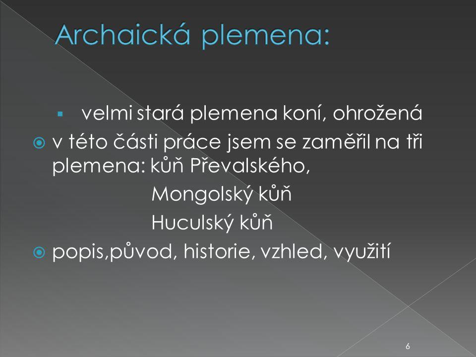  velmi stará plemena koní, ohrožená  v této části práce jsem se zaměřil na tři plemena: kůň Převalského, Mongolský kůň Huculský kůň  popis,původ, historie, vzhled, využití 6