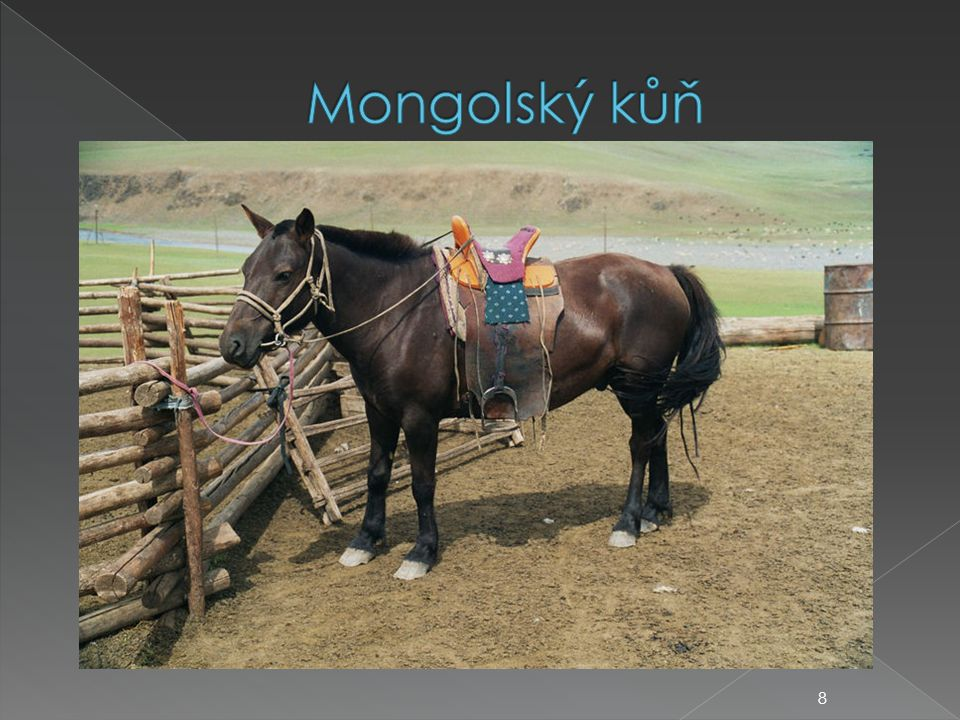  ošetřování koní  ustájení koní  krmení koní  napájení koní  podkování koní  zdravotní problematika koní 19