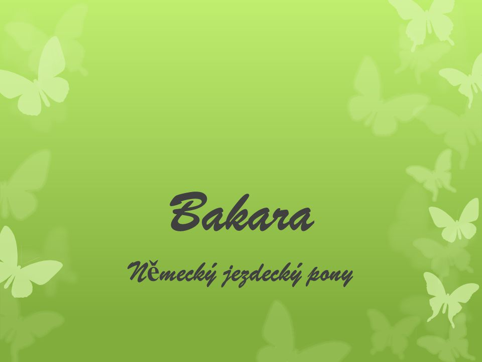 Příchod Když Bakaru poprvé přivezli do stáje ve Vranči byla pohublá a vyděšená nepřijela, ale sama spolu s ní totiž přivezli i strakáčka Borise, který byl možná ještě víc vystrašený a pohublý než Bakara.