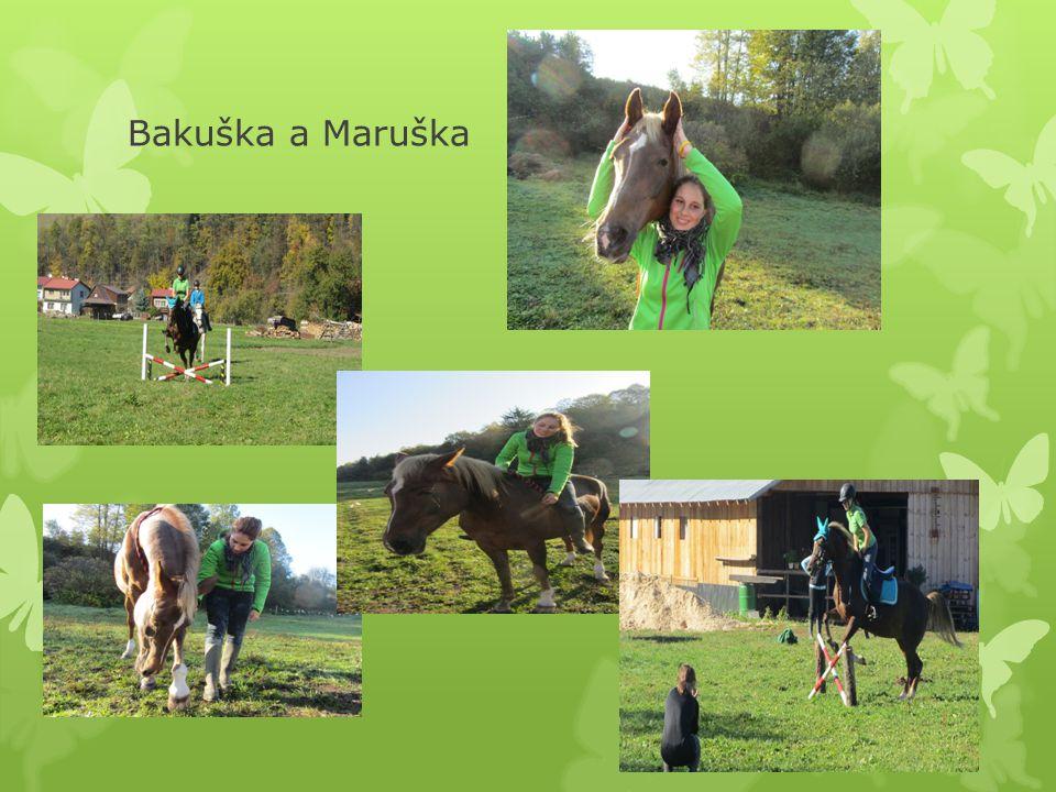 Naše zlato Na Bakči jezdím já a Maruška a přes prázdniny kolovaly takové řeči že se Bakara bude pronajímat děsila jsem se té představy, protože za tu dobu co je Bakulka ve stáji jsem si ji tak oblíbila že za ní musím jít aspoň jednou za týden..
