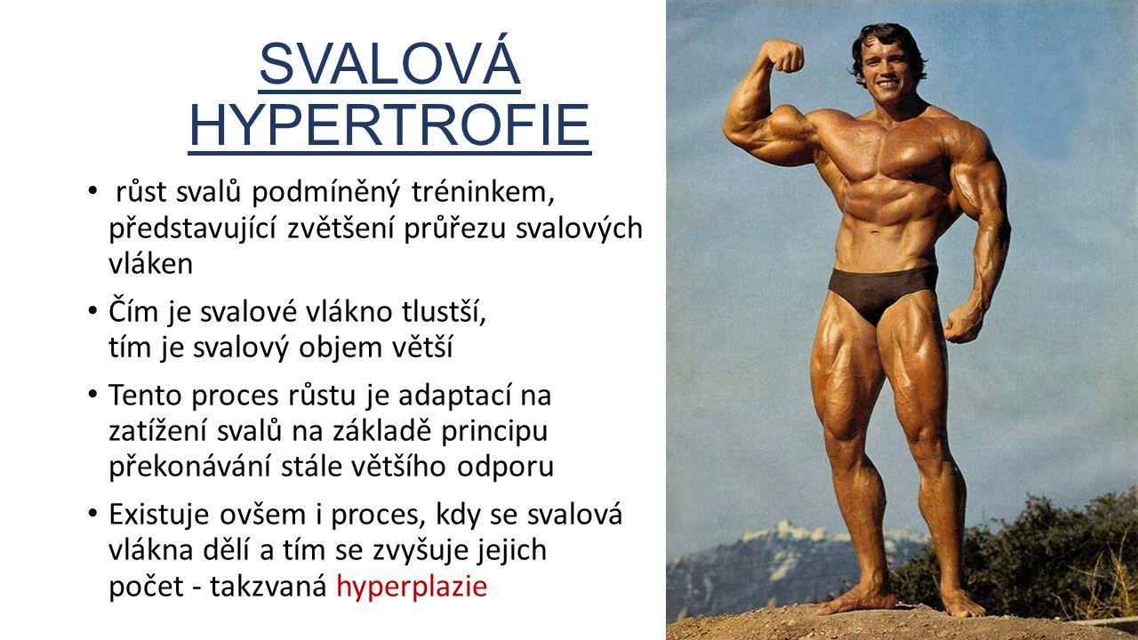 SVALOVÁ HYPERTROFIE růst svalů podmíněný tréninkem, představující zvětšení průřezu svalových vláken Čím je svalové vlákno tlustší, tím je svalový obje
