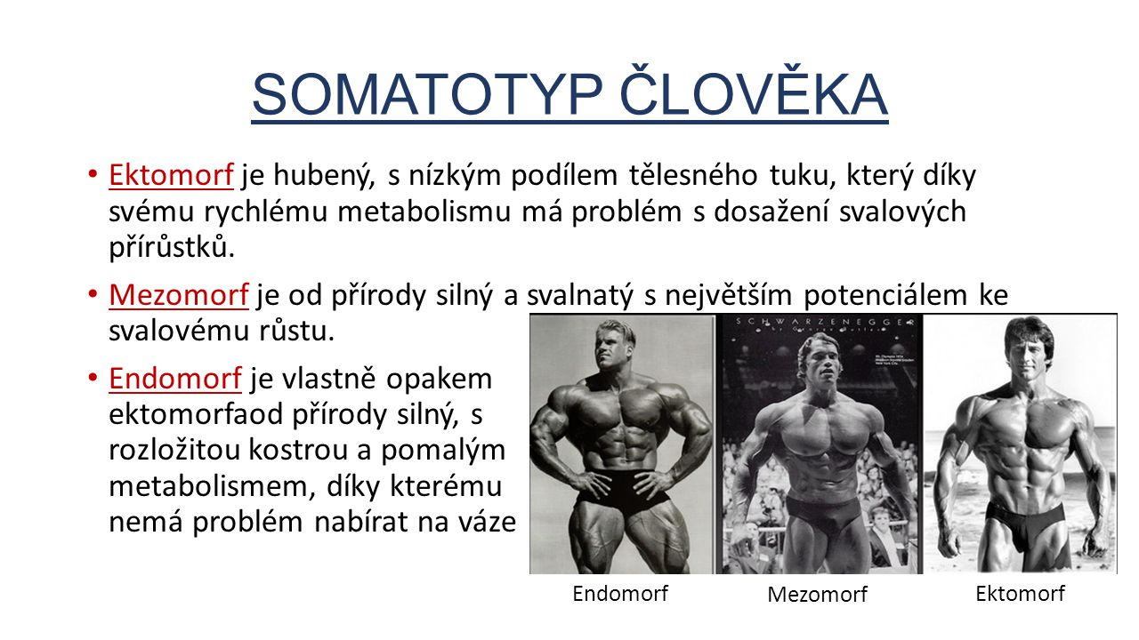 SOMATOTYP ČLOVĚKA Ektomorf je hubený, s nízkým podílem tělesného tuku, který díky svému rychlému metabolismu má problém s dosažení svalových přírůstků