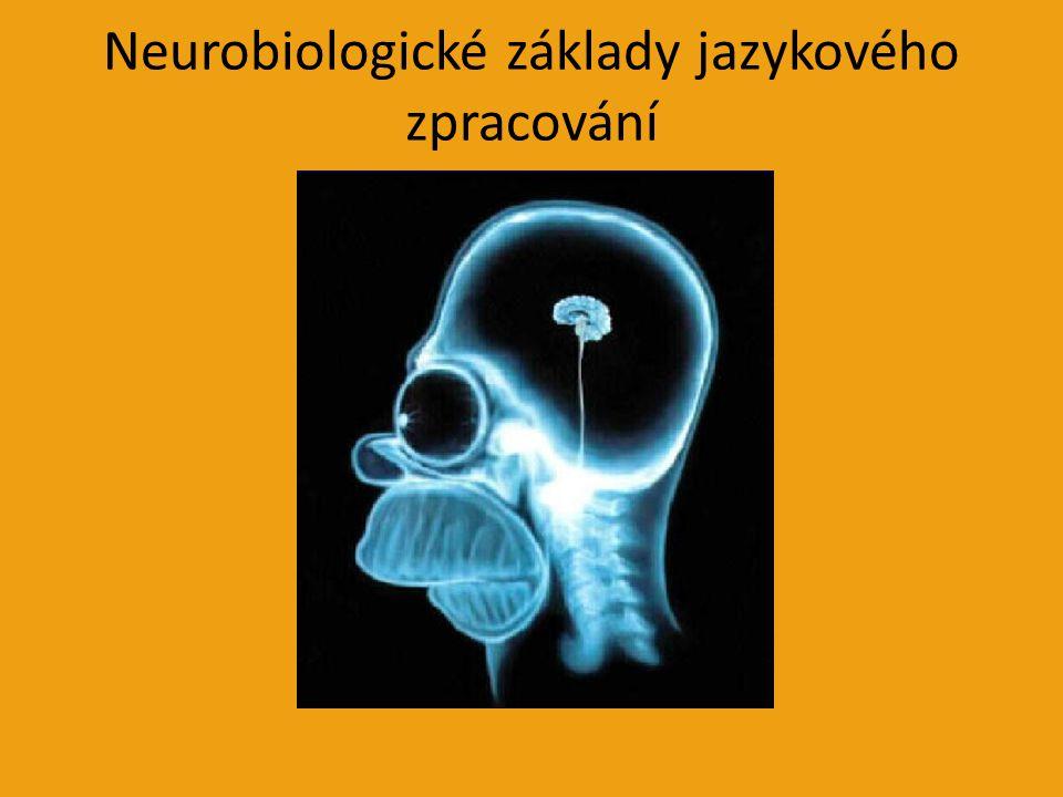Neurobiologické základy jazykového zpracování