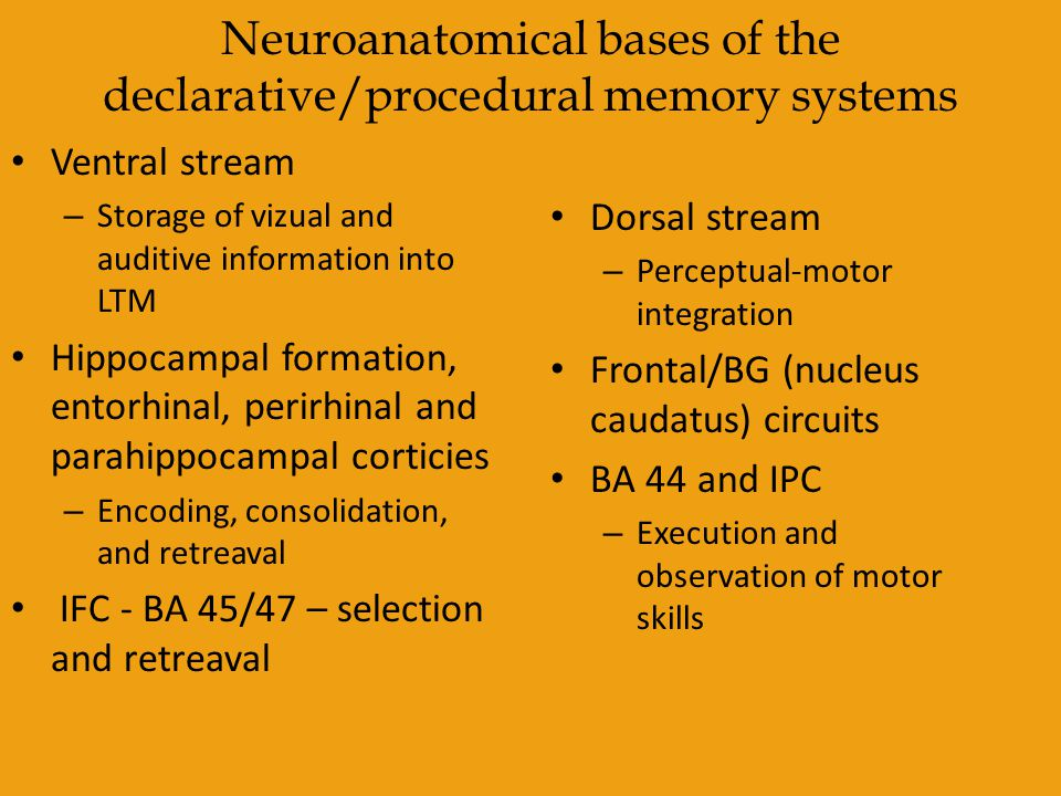 Neuroanatomical bases of the declarative/procedural memory systems Ventral stream – Storage of vizual and auditive information into LTM Hippocampal fo