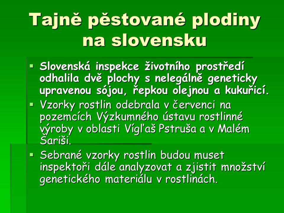 Tajně pěstované plodiny na slovensku  Slovenská inspekce životního prostředí odhalila dvě plochy s nelegálně geneticky upravenou sójou, řepkou olejnou a kukuřicí.