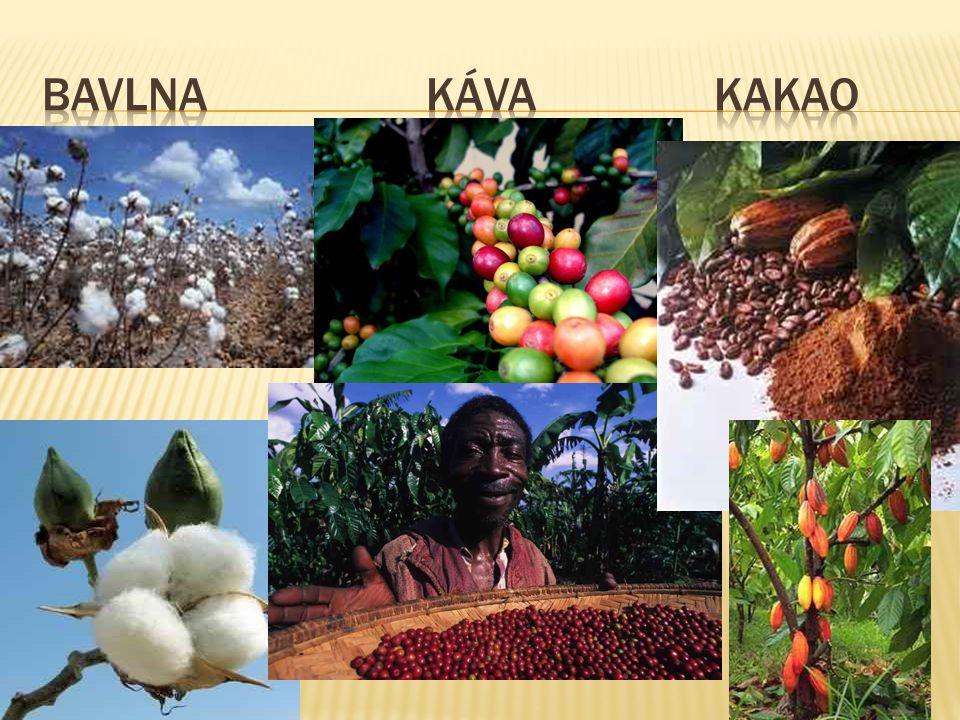 """ Honduras  """"Banánová republika  80% na export"""