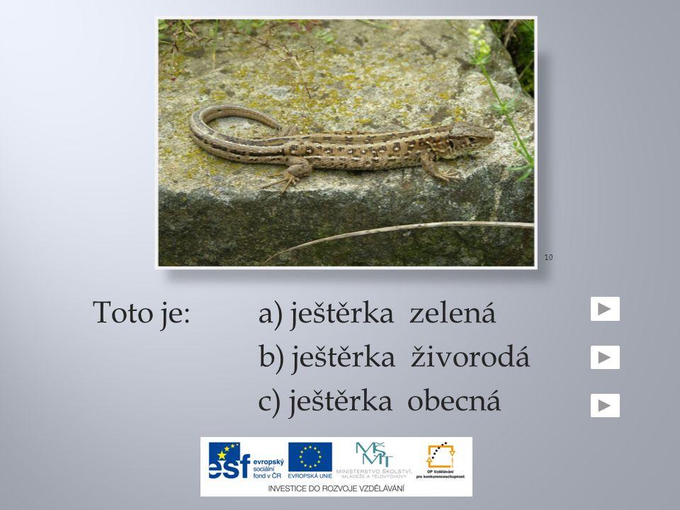 Toto je:a) ještěrka zelená b) ještěrka živorodá c) ještěrka obecná 10
