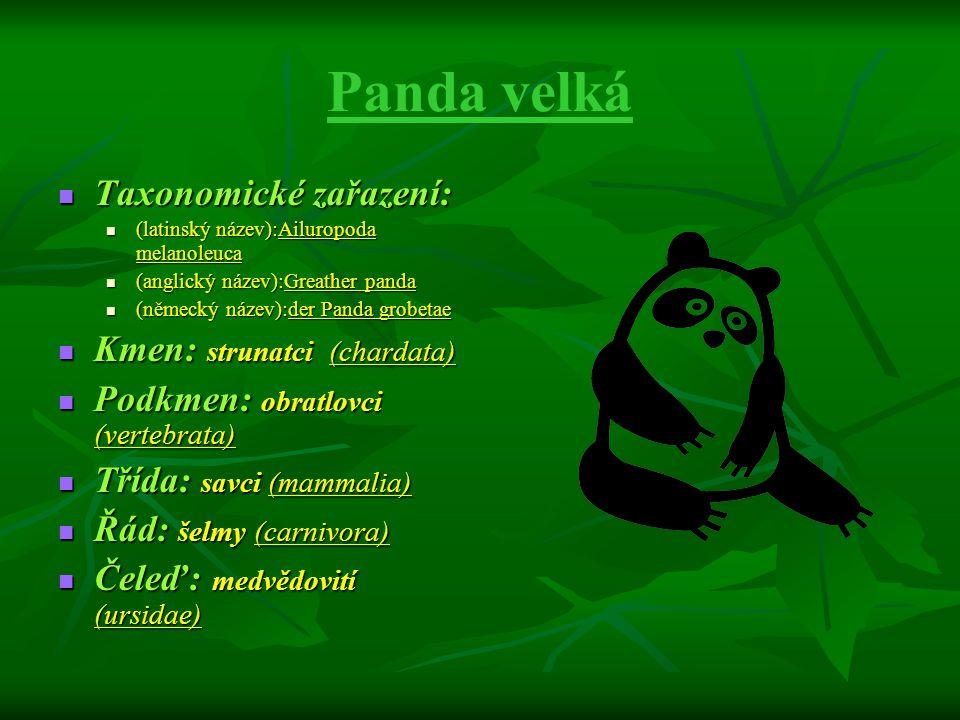 Panda velká Taxonomické zařazení: Taxonomické zařazení: (latinský název):Ailuropoda melanoleuca (latinský název):Ailuropoda melanoleuca (anglický náze