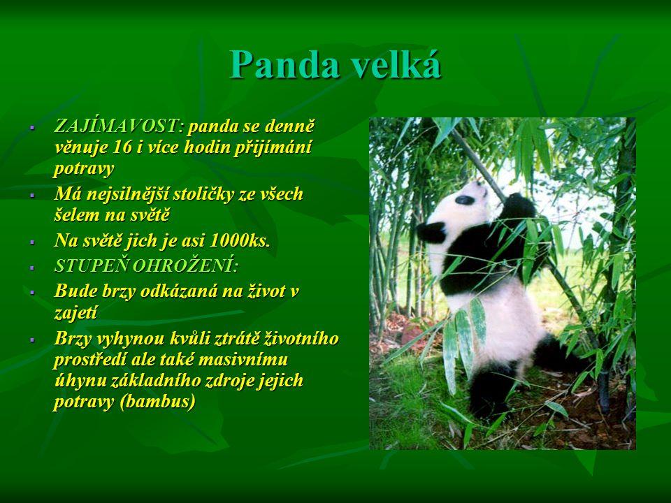 Panda velká Podnebný pás : Mírný a subtropický podnebný pás Podnebný pás : Mírný a subtropický podnebný pás Zoogeografické zařazení: Palearktická a orientální Zoogeografické zařazení: Palearktická a orientální Mapa oblasti: Žije v Číně, především v horách Qvionglai, Daxiangling, Xiaoxiongling a Lian v provincii S-Čhvan a hory Min v pohoří Qincing v provincii Šan-si.