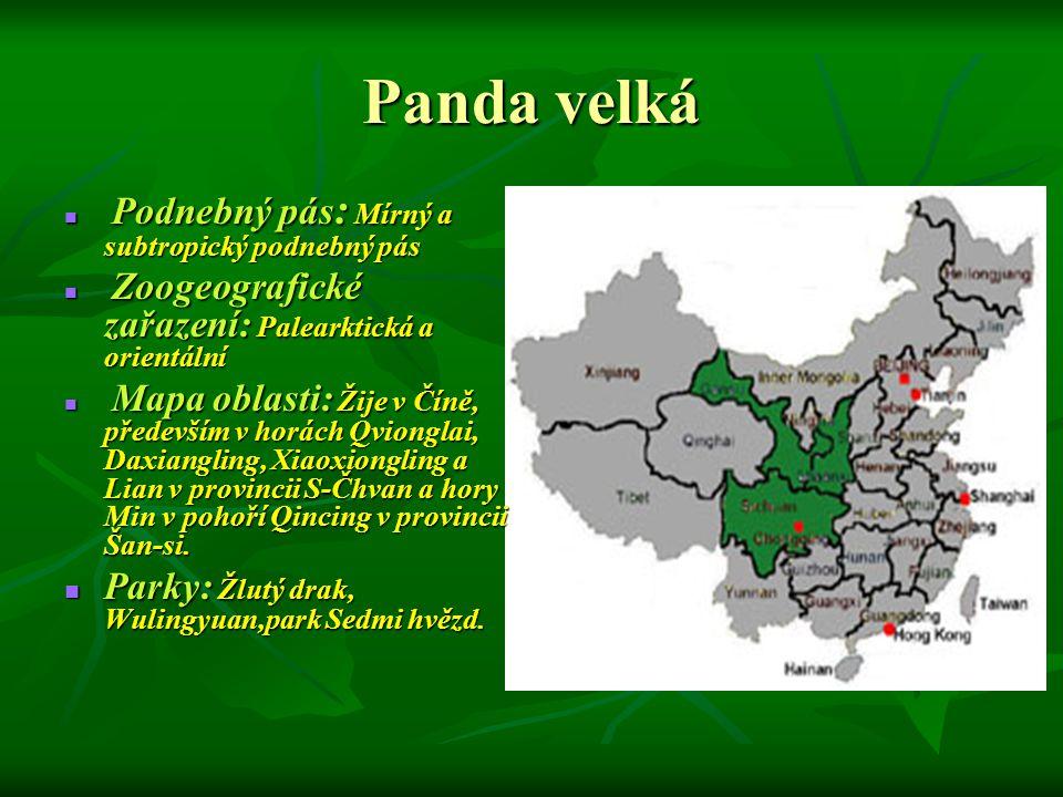Panda velká Podnebný pás : Mírný a subtropický podnebný pás Podnebný pás : Mírný a subtropický podnebný pás Zoogeografické zařazení: Palearktická a or