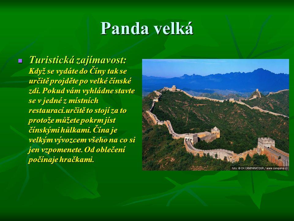 Panda velká Turistická zajímavost: Když se vydáte do Číny tak se určitě projděte po velké čínské zdi. Pokud vám vyhládne stavte se v jedné z místních