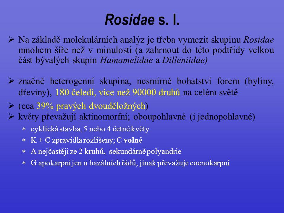  Na základě molekulárních analýz je třeba vymezit skupinu Rosidae mnohem šíře než v minulosti (a zahrnout do této podtřídy velkou část bývalých skupin Hamamelidae a Dilleniidae)  značně heterogenní skupina, nesmírné bohatství forem (byliny, dřeviny), 180 čeledí, více než 90000 druhů na celém světě  (cca 39% pravých dvouděložných)  květy převažují aktinomorfní; oboupohlavné (i jednopohlavné)  cyklická stavba, 5 nebo 4 četné květy  K + C zpravidla rozlišeny; C volné  A nejčastěji ze 2 kruhů, sekundárně polyandrie  G apokarpní jen u bazálních řádů, jinak převažuje coenokarpní