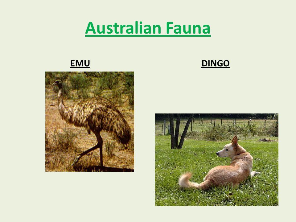 Australian Fauna EMUDINGO