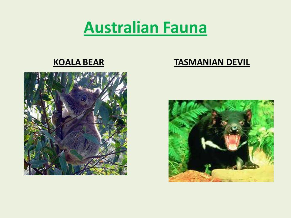 Australian Fauna KOALA BEARTASMANIAN DEVIL