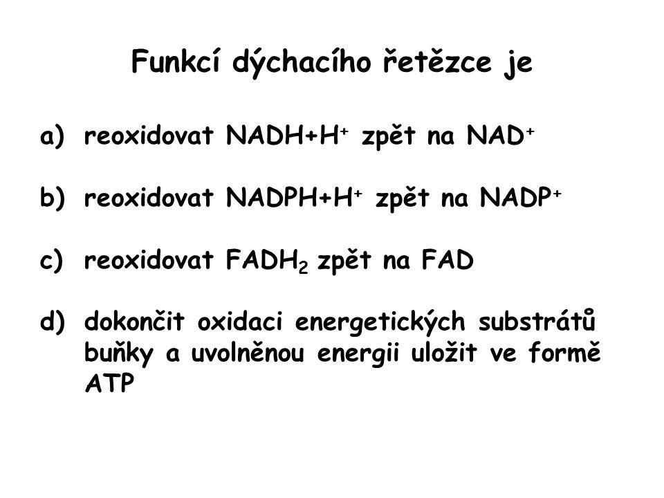 Funkcí dýchacího řetězce je a)reoxidovat NADH+H + zpět na NAD + b)reoxidovat NADPH+H + zpět na NADP + c)reoxidovat FADH 2 zpět na FAD d)dokončit oxida
