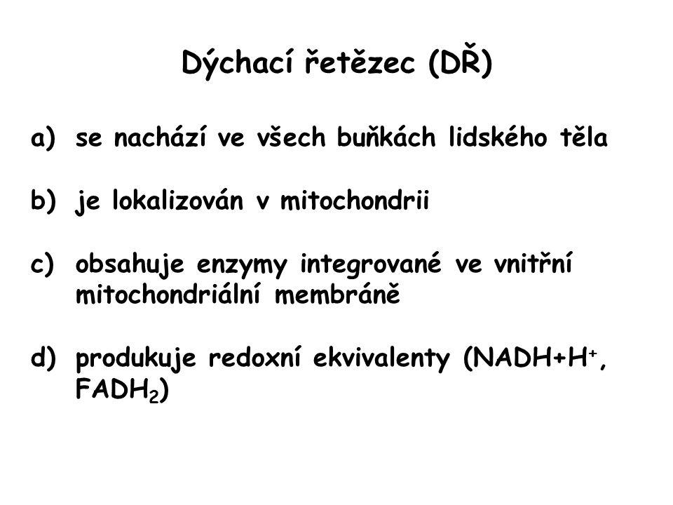 Dýchací řetězec (DŘ) a)se nachází ve všech buňkách lidského těla b)je lokalizován v mitochondrii c)obsahuje enzymy integrované ve vnitřní mitochondriální membráně d)produkuje redoxní ekvivalenty (NADH+H +, FADH 2 )