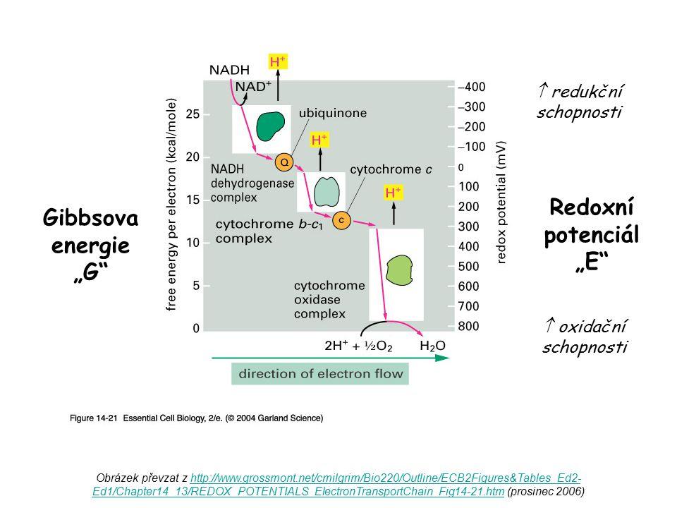 Obrázek převzat z http://www.grossmont.net/cmilgrim/Bio220/Outline/ECB2Figures&Tables_Ed2- Ed1/Chapter14_13/REDOX_POTENTIALS_ElectronTransportChain_Fi