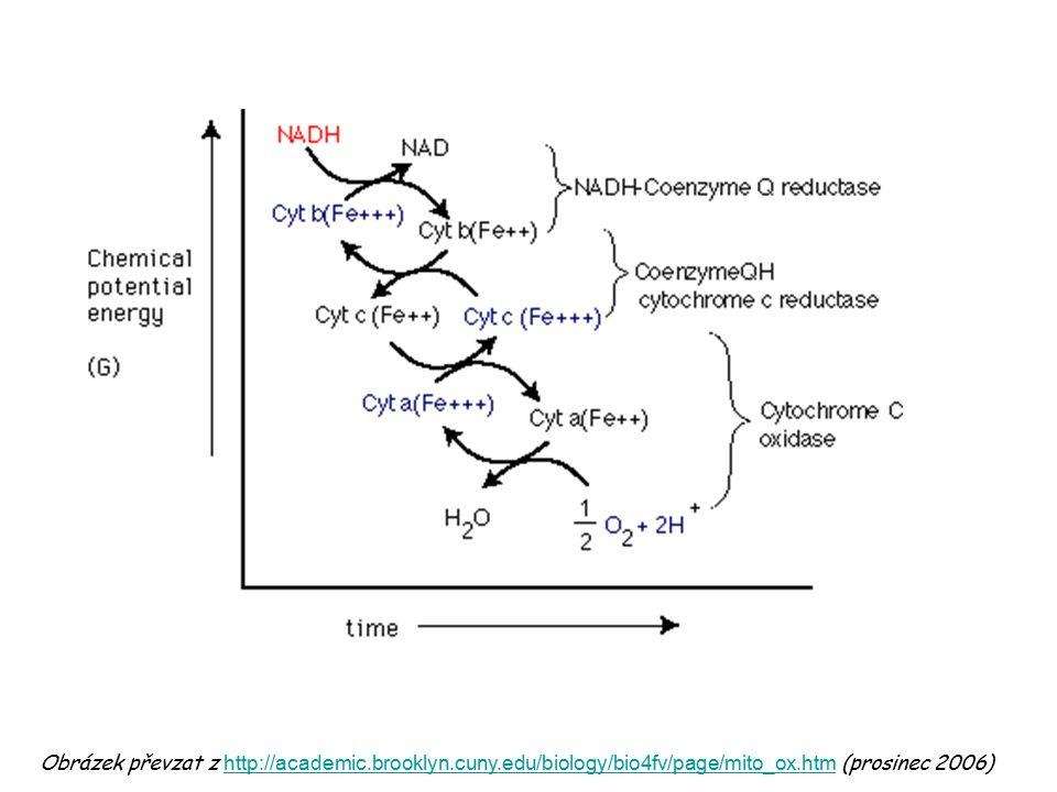 mezimembránový prostor matrix mitochondrie proton = H + elektron = e - Obrázek je převzat z učebnice: Devlin, T.