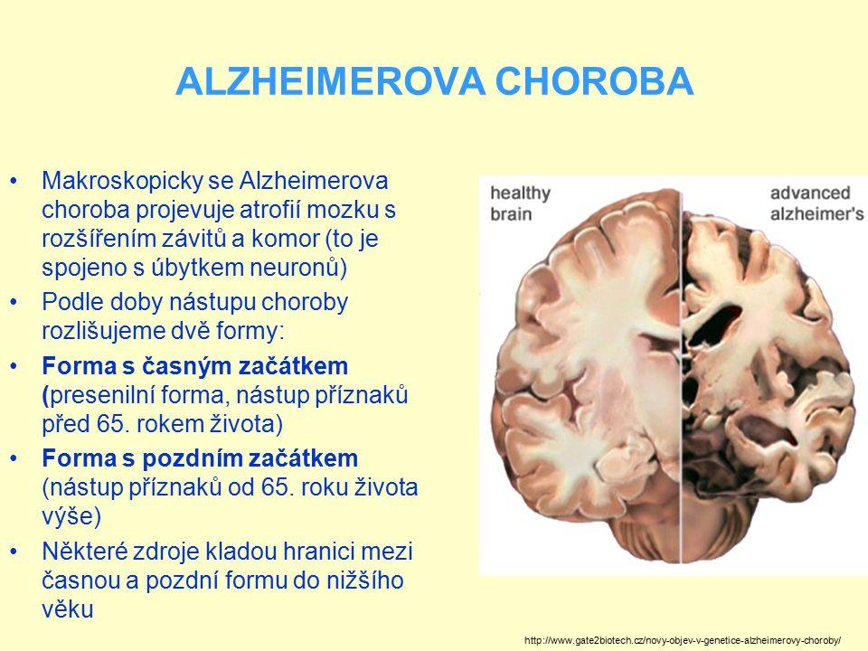 ALZHEIMEROVA CHOROBA Makroskopicky se Alzheimerova choroba projevuje atrofií mozku s rozšířením závitů a komor (to je spojeno s úbytkem neuronů) Podle