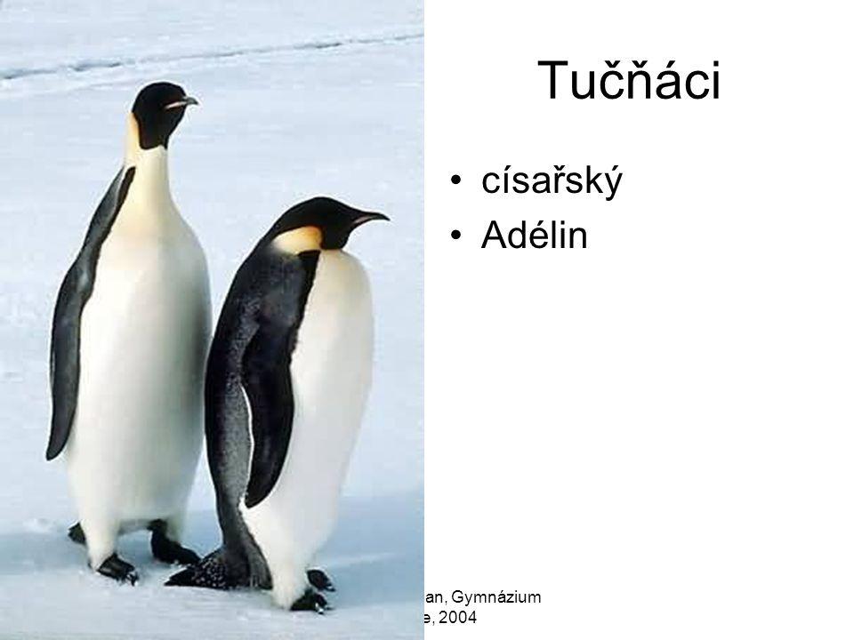 Zdeněk Bergman, Gymnázium Teplice, 2004 Tučňáci císařský Adélin