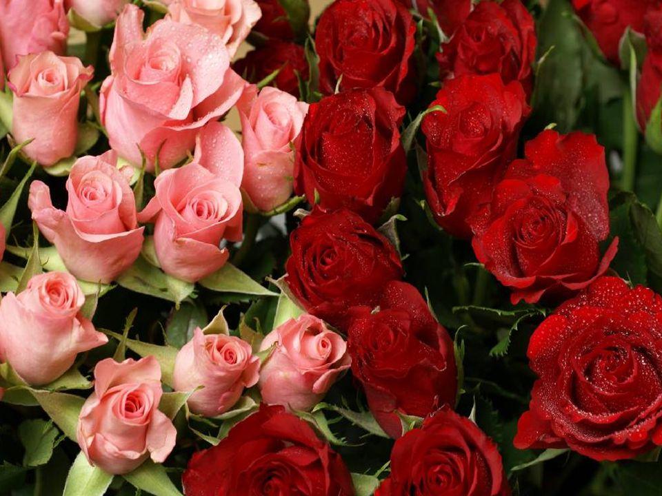 V mládí ztrácíme rozum kvůli lásce, později ztrácíme lásku kvůli rozumu.