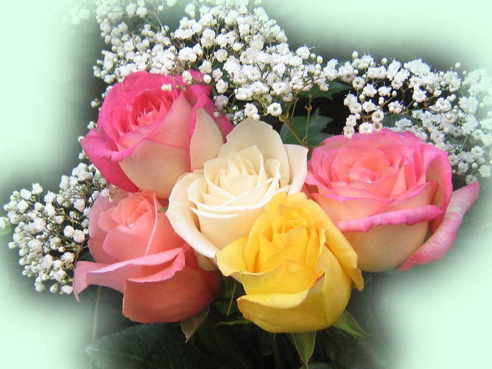 Dobré jsou růže, trny jsou zlé, zahradou života každý z nás jde. Varuj se šrámů, co se dlouho hojí, miluj lidi, co za to stojí.