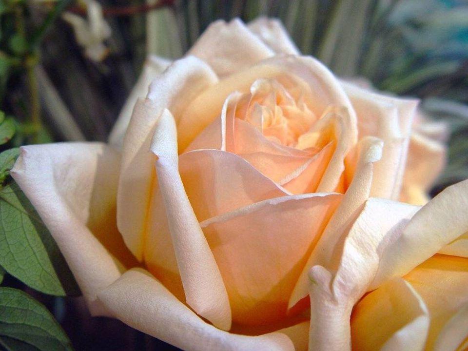 Netrhejte motýlům křídla, vždyť oni pak pláčou. Nešlapte po kytkách, vždyť kytky tak krásně voní. Nezabíjejte lásku, vždyť láska je křehká jako ty kyt