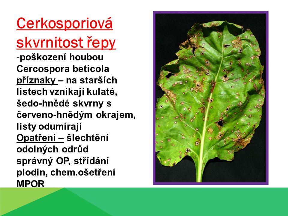 Cerkosporiová skvrnitost řepy -poškození houbou Cercospora beticola příznaky – na starších listech vznikají kulaté, šedo-hnědé skvrny s červeno-hnědým okrajem, listy odumírají Opatření – šlechtění odolných odrůd správný OP, střídání plodin, chem.ošetření MPOR