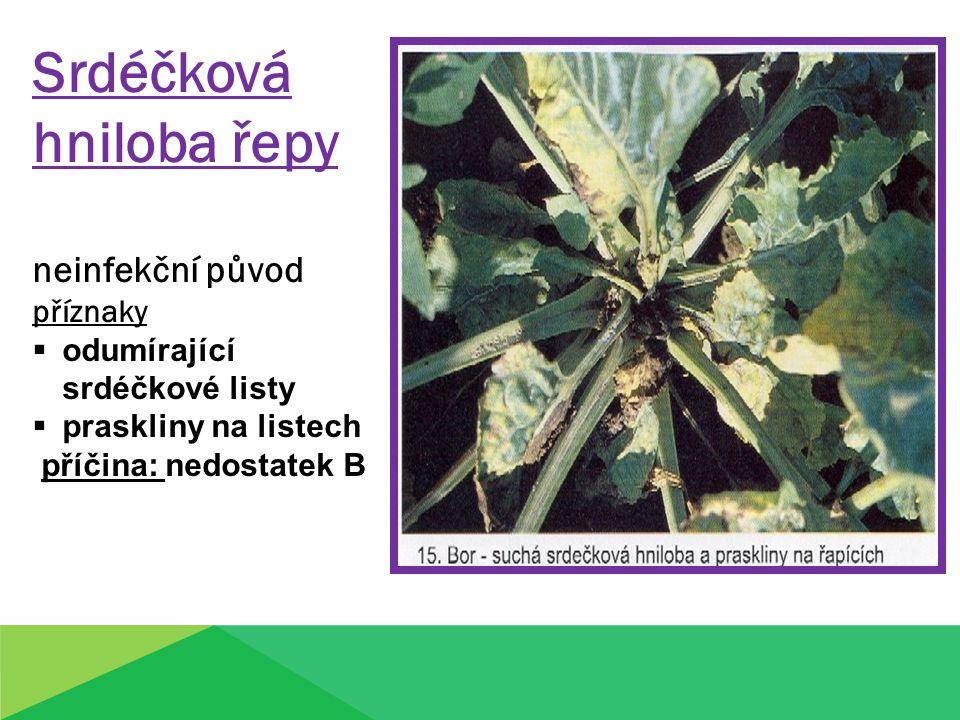 Srdéčková hniloba řepy neinfekční původ příznaky  odumírající srdéčkové listy  praskliny na listech příčina: nedostatek B