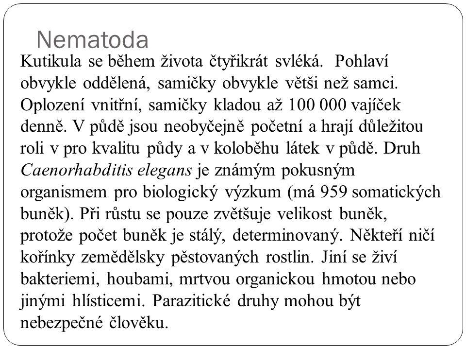 Nematoda Kutikula se během života čtyřikrát svléká.