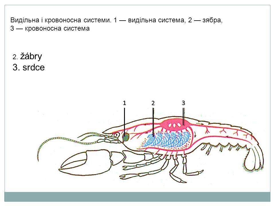 Травна нервова і статева системи.
