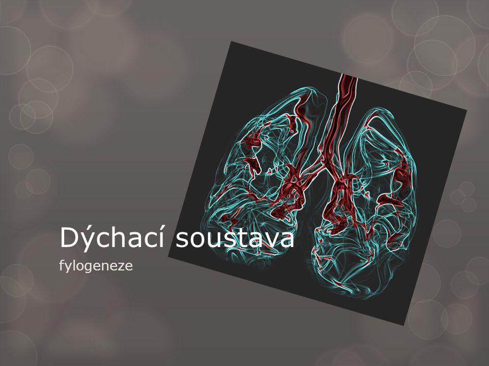 fylogeneze Dýchací soustava