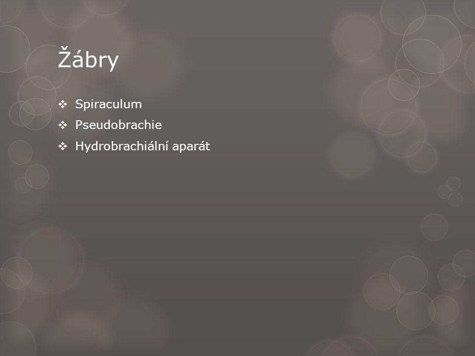 Žábry  Spiraculum  Pseudobrachie  Hydrobrachiální aparát