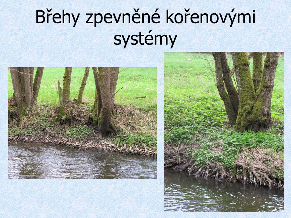 Břehy zpevněné kořenovými systémy