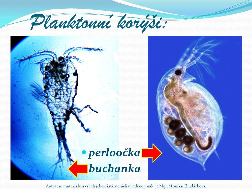 Planktonní korýši: perloočka buchanka Autorem materiálu a všech jeho částí, není-li uvedeno jinak, je Mgr. Monika Chudárková