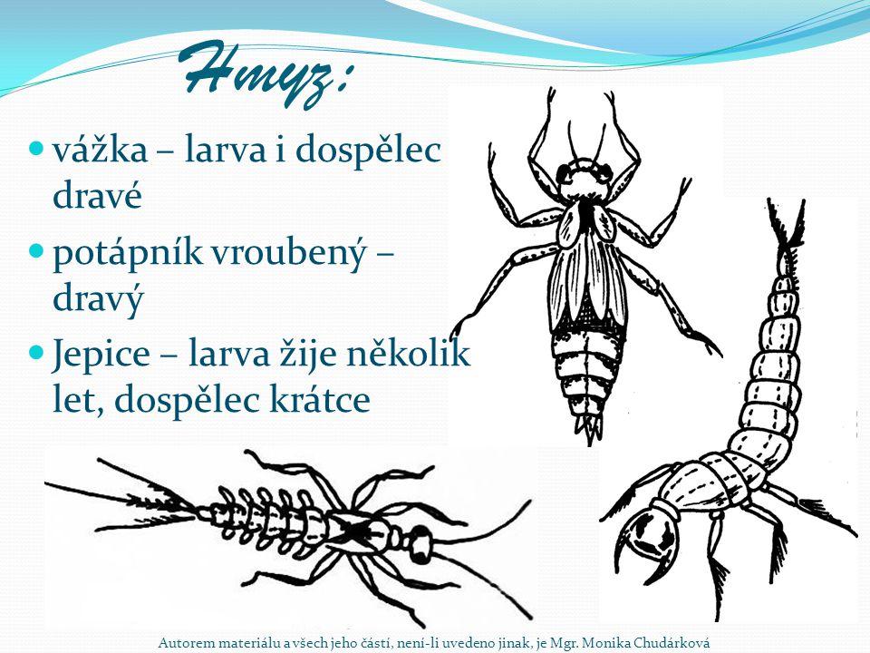 Hmyz: vážka – larva i dospělec dravé potápník vroubený – dravý Jepice – larva žije několik let, dospělec krátce Autorem materiálu a všech jeho částí,