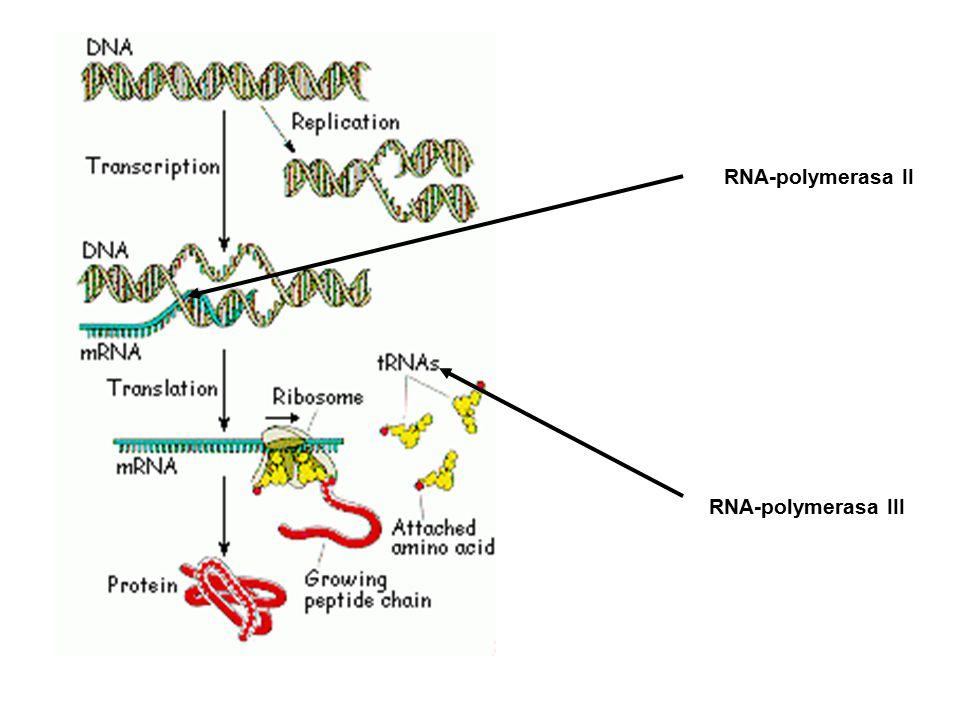 5 Muchomůrka zelená Toxické látky amatoxiny, falotoxiny a falolyziny Amatoxiny , ,  - amanitin amatoxiny, falotoxiny LD 50 (člověk) = 0,1 - 0,3 mg/kg hepatotoxické, enterohepatální cirkulace nefrotoxické orgánová úroveň inhibice RNA - polymerázy II a IIImolekulární - buněčná úroveň Játra Žlučník Žlučovod Dvanáctník Vyloučené látky Vrátnicová žíla RNA-polymerasa II RNA-polymerasa III
