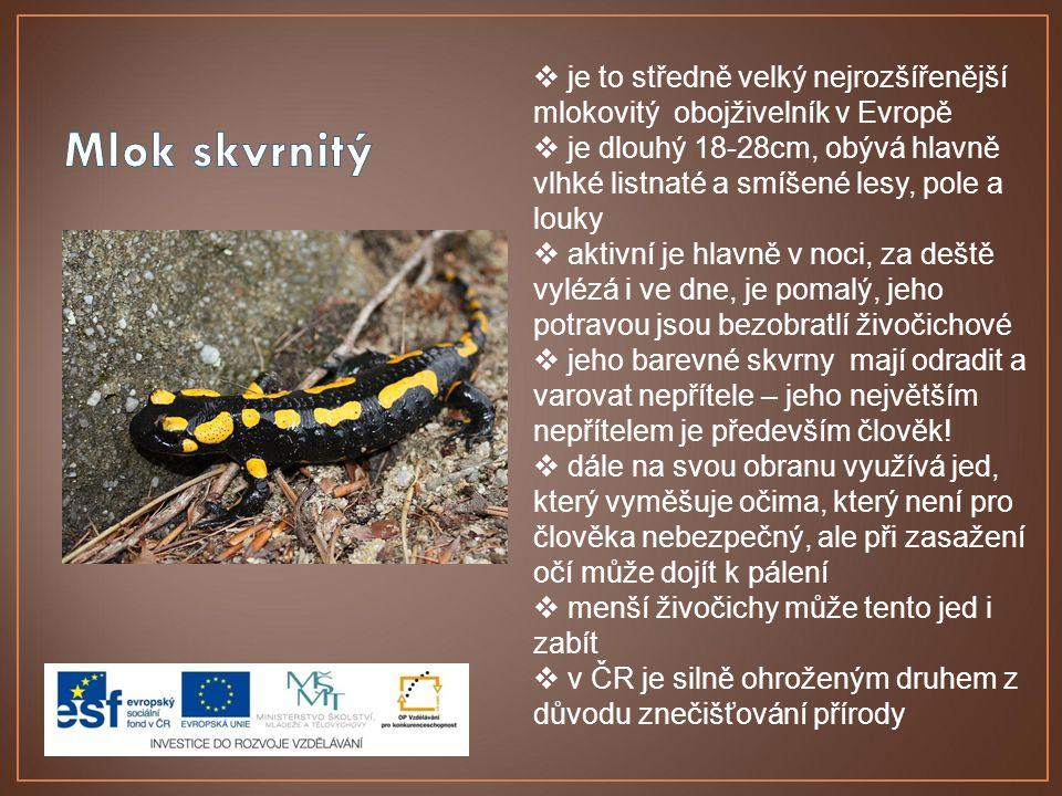  je to středně velký nejrozšířenější mlokovitý obojživelník v Evropě  je dlouhý 18-28cm, obývá hlavně vlhké listnaté a smíšené lesy, pole a louky 