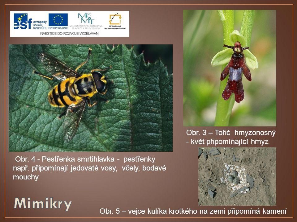 Obr. 4 - Pestřenka smrtihlavka - pestřenky např. připomínají jedovaté vosy, včely, bodavé mouchy Obr. 3 – Tořič hmyzonosný - květ připomínající hmyz O