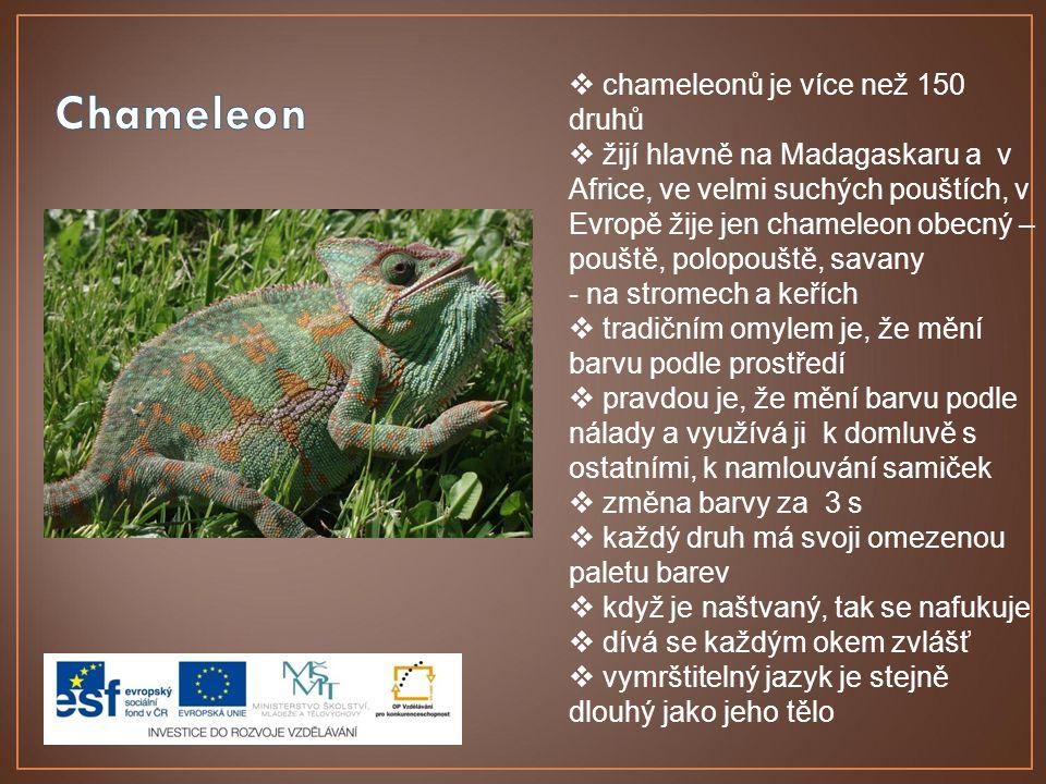  chameleonů je více než 150 druhů  žijí hlavně na Madagaskaru a v Africe, ve velmi suchých pouštích, v Evropě žije jen chameleon obecný – pouště, po