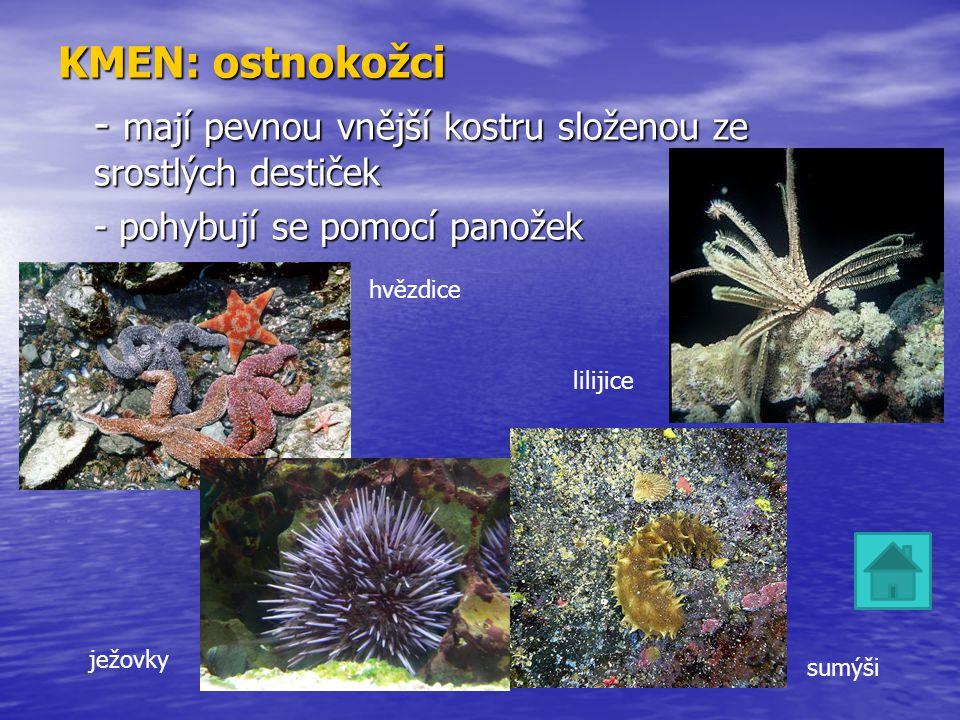 KMEN: ostnokožci - mají pevnou vnější kostru složenou ze srostlých destiček - pohybují se pomocí panožek hvězdice ježovky sumýši lilijice